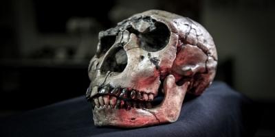 'Evrim, yirmilik dişlerimizin yok olmasına sebep olacak'