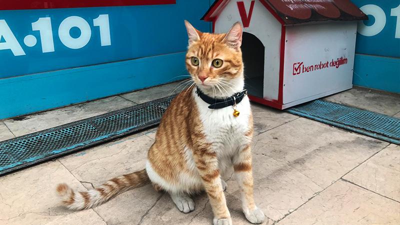 Fenomen kedi market çalışanları tarafından sahiplenildi, adını bıcırık koydular