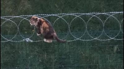 Fethiye'de kedilere zarar veren 'jiletli tel' kullanımı yasaklandı
