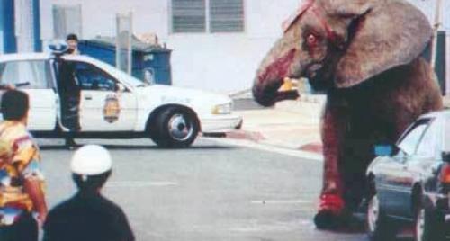 Tyke isimli fil çılgınca yaşama koştu!