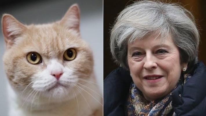 Fransız bakan kapıyı açtığında çıkmayan kedinin adını 'Brexit' koydu