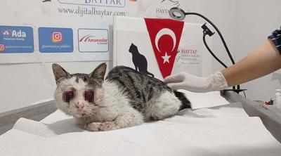 Gaziantep'te kedinin gözlerini oydular