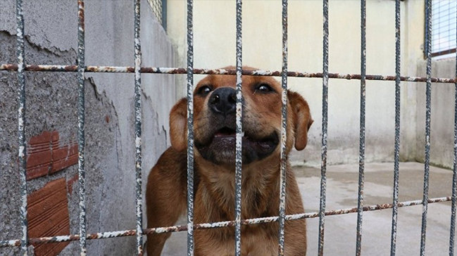 Güney Kore'de köpek mezbahası kapatıldı