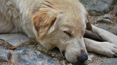 Hatay'da köpeğe tecavüz eden şahıs gözaltına alındı