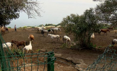Hatay'daki kayıp atların çiplerini çıkaran kişinin evinde inceleme yapıldı