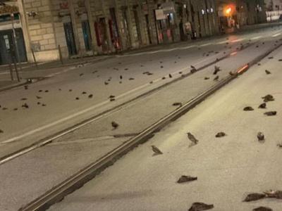 Havai fişek yüzlerce kuşu öldürdü