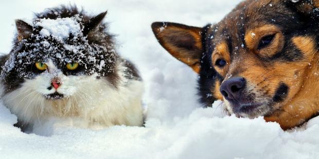 HAYTAP: Köpeklerin tüyleri sayesinde üşümediği tamamen yanlış bir inanış