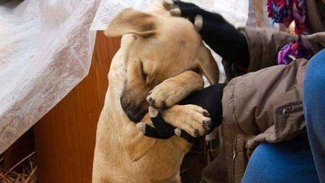 Hayvan hakları düzenlemesi AKP tarafından askıya alındı