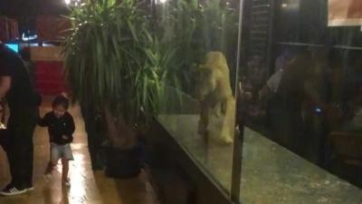 Hayvan hapsedilen nargile kafenin izni iptal edildi