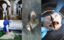 Hayvanları nasıl öldürdüklerini bilmemizi istemiyorlar!