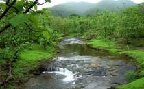 Hindistan yeni ormanlar yaratmak için 6 milyar dolar harcayacak!