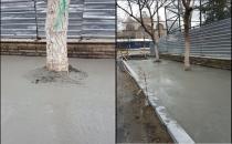 İBB çevre düzenlemesinde ağaçların dibine beton döktü!