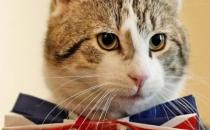 İngiltere Dışişleri Bakanlığı fare öldürtmek için kedi aldı!