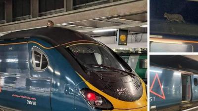 İngiltere'de hızlı trenin üzerine çıkan kedi, 2,5 saatte indirildi