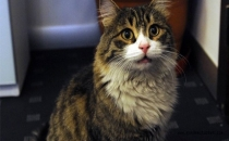 İngiltere'de kediler başları kesilerek öldürülüyor!