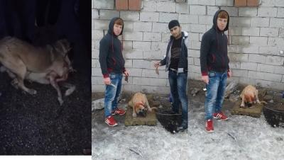 ISHAYKO: O şahısların köpek ve horoz dövüştürdüklerini tespit ettik