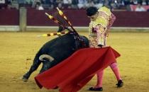 İspanya mahkemesi 'Boğalara işkenceye devam' dedi!