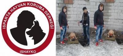 Isparta Hayvan Koruma Derneği: Köpeği bulamadık