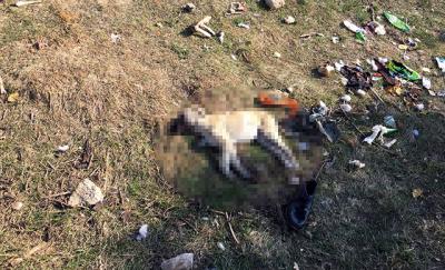 Isparta'da 7 köpek zehirlendi