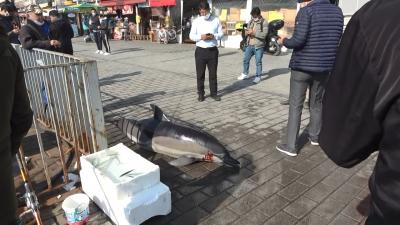 İstanbul Boğazı'nda 3 ölü yunus sahile vurdu