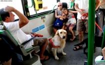İstanbul'da hayvanlarla toplu halde metrobüse binilecek!