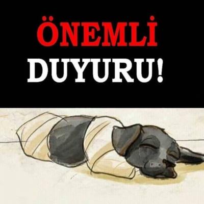 İstanbul'da, kesilen köpek için eylem çağrısı!