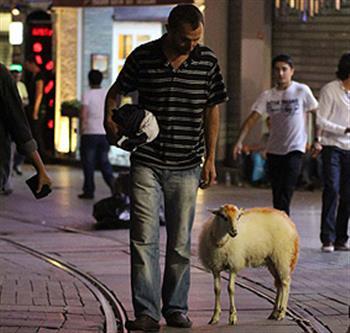 İstiklal Caddesi'nde kuzu gezdiren adam!