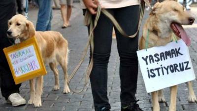 İyi Partili Sıdalı, hayvan hakları için kanun taslağı hazırladı