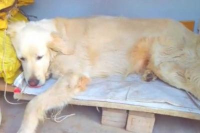 İzmir'de belediye başkanı gelecek diye köpekleri uyuttular!