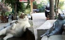 Kadıköy'ün kedisi 'Tombili'nin heykeli çalındı