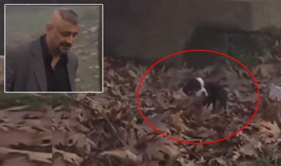 Kanal 7'deki filmde yavru köpeğe tekme sahnesi tepki gördü