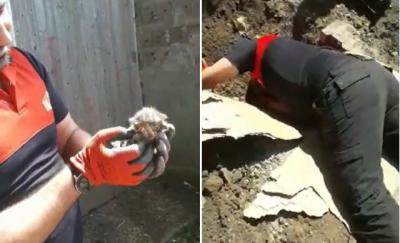 Kastamonu'da su borusuna sıkışan 2 yavru kedi kurtarıldı