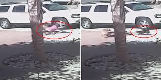 Kedi, 4 yaşındaki çocuğu kurtardı!