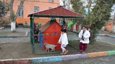 Kedi evi projesi adı altında hayvanlar hapsedildi