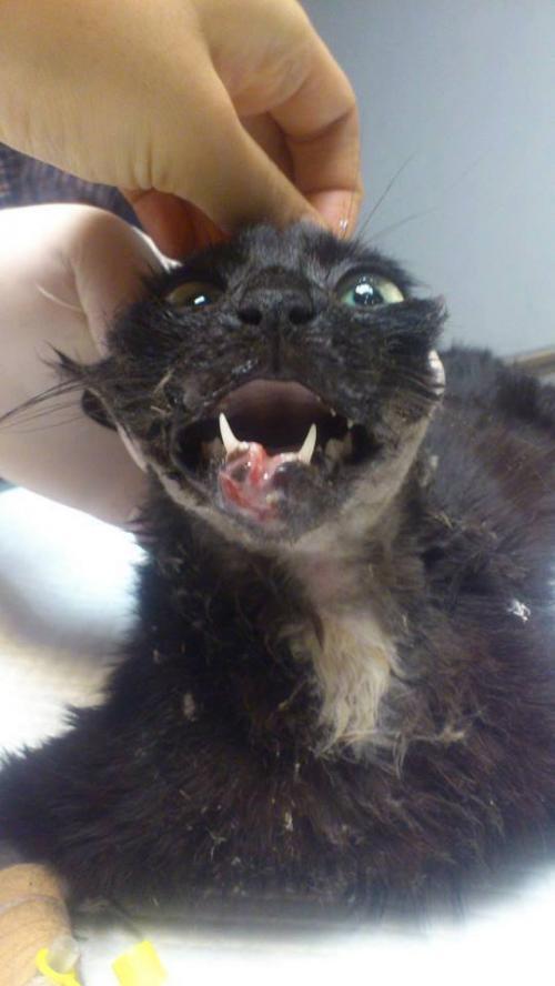 Haysev'den yaralı kedi için bağış kampanyası!