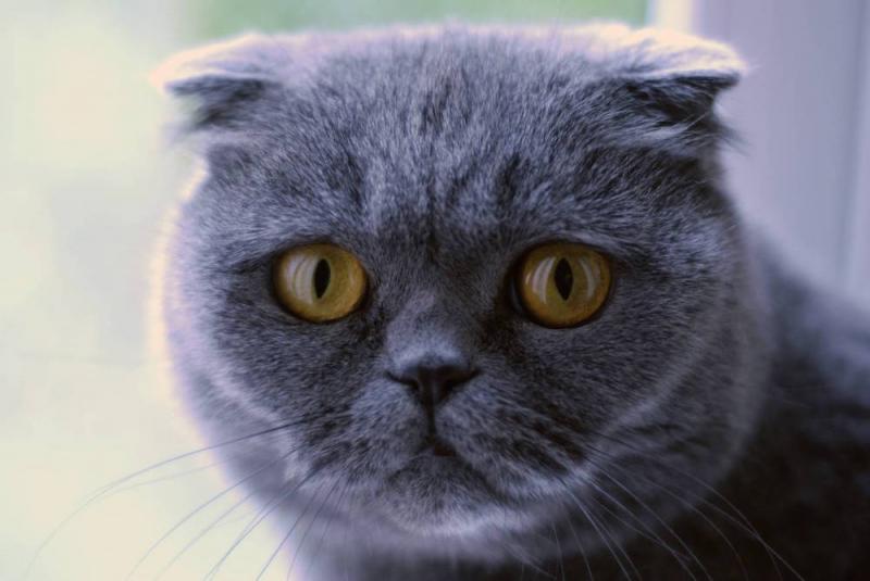 Kedisini beslemesine izin vermeyen ev sahibini 49 yerinden bıçakladı