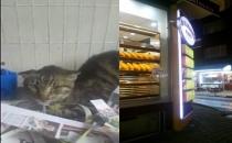 Kediye işkence haberi nedeniyle kendini polis olarak tanıtıp Vehaber'i tehdit etti!