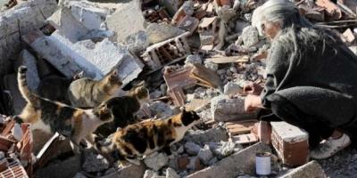 Kentsel dönüşüm yüzlerce kedinin ölümüne neden oldu