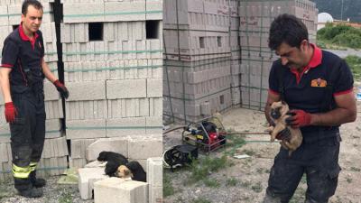 Konya'da itfaiye ekipleri yavru köpekleri kurtardı