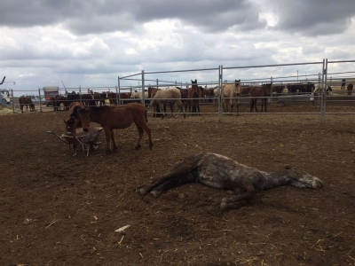 Konya'daki çiftlikte terk edilen atlar açlıktan öldü