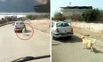 Köpeğe işkence eden sürücüye 1033 lira para cezası