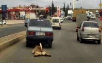 Köpeğe işkence yapan kişi yakalandı
