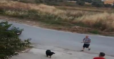 Köpeğe pompalı tüfekle ateş açtı