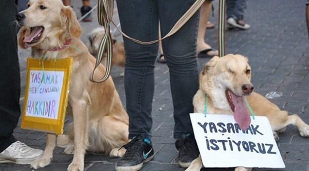 Köpeğe yumruk atan kişi gözaltına alındı