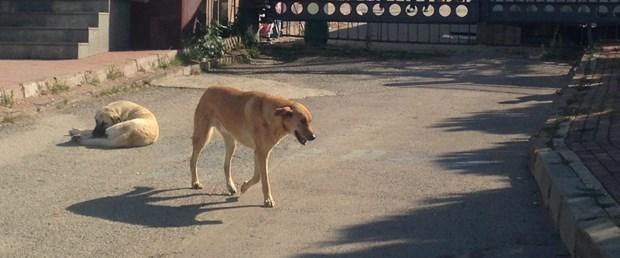 Köpeği bıçaklayarak öldüren profesör serbest bırakıldı