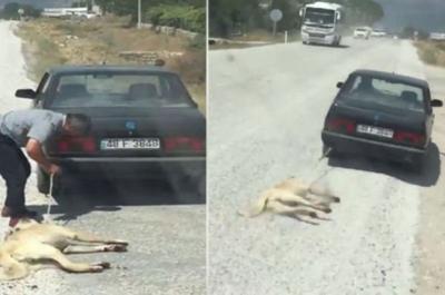 Köpeği otomobille sürükleyen işkenceci serbest bırakıldı