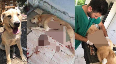 Köpeği yaralayan kişi ifade verdikten sonra serbest bırakılınca köpeği öldürdü