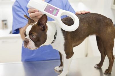 Köpeğine mikroçip taktırmayanlara 10 bin TL para cezası!