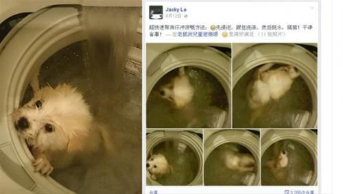 Köpeği çamaşır makinasına attı!