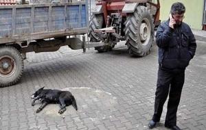 Köpek can çekişti, belediye seyretti!